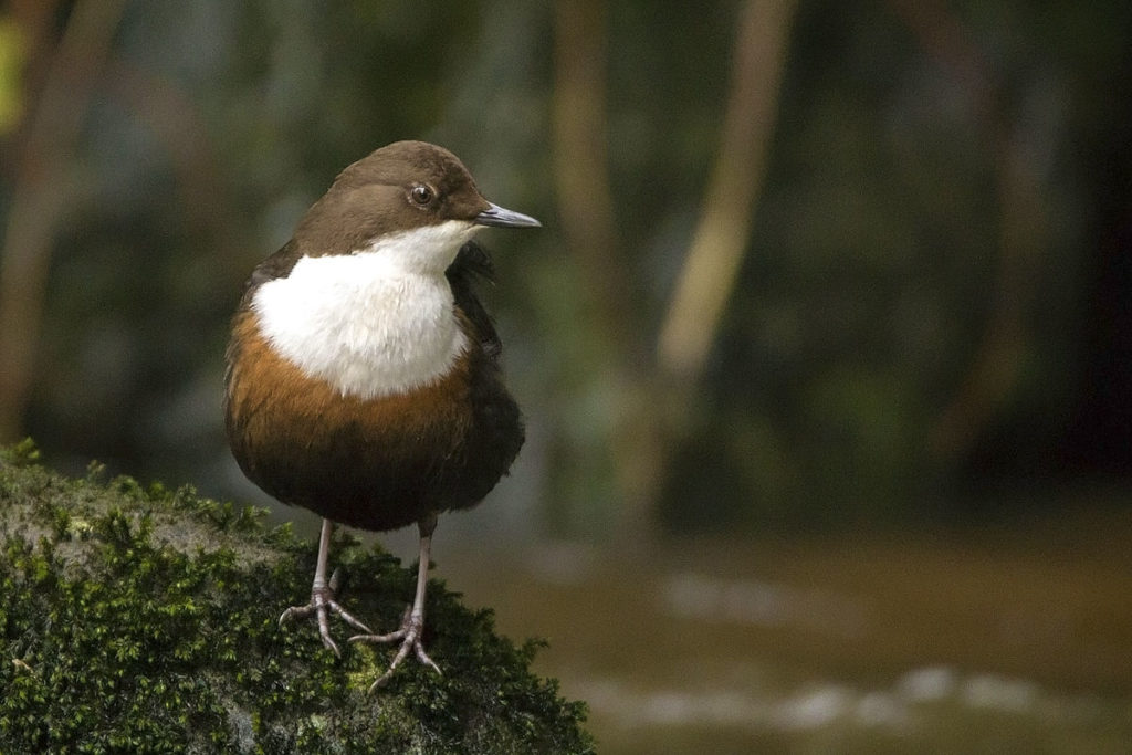 3-dipper-from
